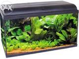 Рыбки, аквариумы Аквариумы и оборудование, цена 86 Грн., Фото