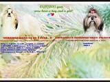 Собаки, щенки Ши-тцу, цена 12000 Грн., Фото