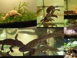 Рибки, акваріуми Рибки, ціна 215 Грн., Фото