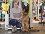 Собаки, щенки Немецкая овчарка, цена 100 Грн., Фото