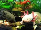 Рибки, акваріуми Рибки, ціна 120 Грн., Фото