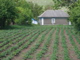 Дома, хозяйства Черновицкая область, цена 300000 Грн., Фото