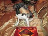 Собаки, щенки Гладкошерстный фокстерьер, цена 1200 Грн., Фото