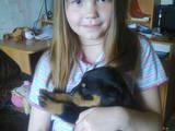 Собаки, щенята Ротвейлер, ціна 2200 Грн., Фото