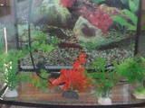 Рибки, акваріуми Акваріуми і устаткування, ціна 350 Грн., Фото