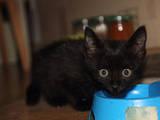 Кошки, котята Беспородная, цена 1 Грн., Фото