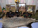 Собаки, щенята Гладкошерста такса, ціна 5 Грн., Фото