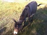 Тварини Різне, ціна 10000 Грн., Фото
