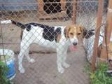Собаки, щенки Разное, цена 1700 Грн., Фото