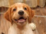 Собаки, щенята Невідома порода, ціна 7000 Грн., Фото