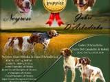 Собаки, щенки Неизвестная порода, цена 7000 Грн., Фото