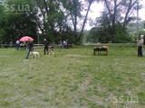 Собаки, щенята Російський хорт, ціна 2200 Грн., Фото