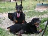 Тварини Екзотичні тварини, ціна 21200 Грн., Фото