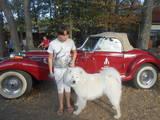 Собаки, щенята Самоїдом, Фото