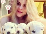 Собаки, щенки Бишон фрисе, цена 10000 Грн., Фото