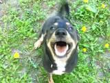 Собаки, щенята Невідома порода, Фото
