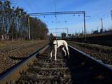 Собаки, щенки Аргентинский дог, цена 12500 Грн., Фото