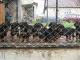 Собаки, щенята Різне, ціна 2600 Грн., Фото