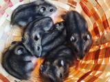 Грызуны Хомяки, цена 20 Грн., Фото