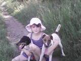 Собаки, щенки Гладкошерстный фокстерьер, цена 1 Грн., Фото