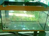 Рибки, акваріуми Акваріуми і устаткування, ціна 400 Грн., Фото