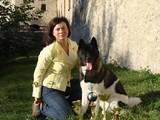 Собаки, щенята Американський акіта, ціна 37000 Грн., Фото