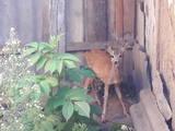 Животные Экзотические животные, цена 400 Грн., Фото