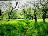 Земля и участки Днепропетровская область, цена 250000 Грн., Фото