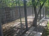 Собаки, щенки Корм, цена 170 Грн., Фото