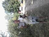 Собаки, щенята Джек Рассел тер'єр, ціна 500 Грн., Фото