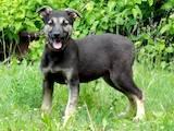 Собаки, щенки Беспородная, цена 10 Грн., Фото