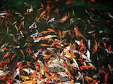 Рибки, акваріуми Корм, ціна 300 Грн., Фото