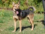 Собаки, щенята Невідома порода, ціна 10 Грн., Фото