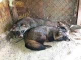 Тварини Екзотичні тварини, ціна 10 Грн., Фото