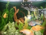 Рыбки, аквариумы Аквариумы и оборудование, цена 10000 Грн., Фото