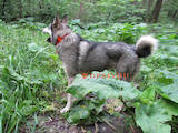 Собаки, щенята Аксесуари, ціна 2500 Грн., Фото