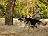Собаки, щенята Східно-Європейська вівчарка, ціна 13000 Грн., Фото