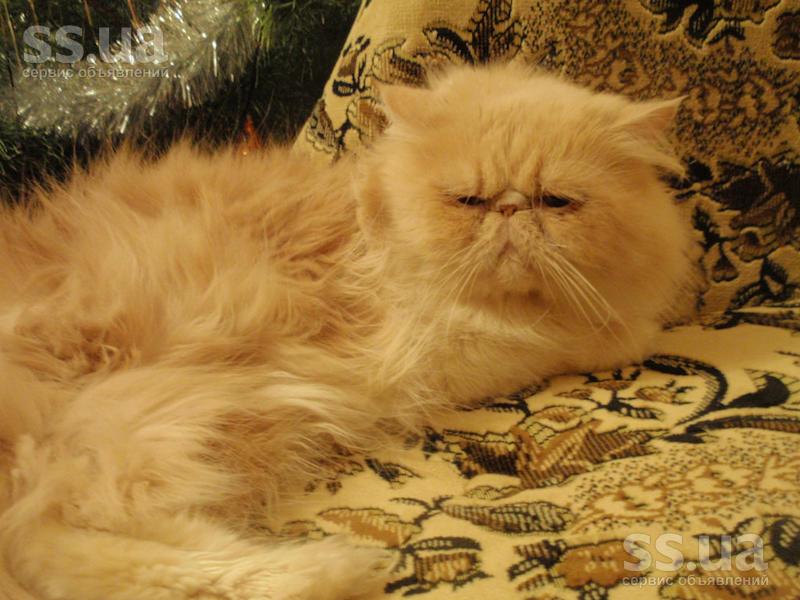 страница имеет персидские экстремальные коты фото методу Довженко цены