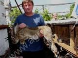 Гризуни Кролики, ціна 110 Грн., Фото