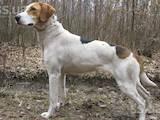 Собаки, щенята Невідома порода, ціна 2500 Грн., Фото