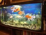 Рибки, акваріуми Акваріуми і устаткування, ціна 9500 Грн., Фото
