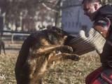 Собаки, щенки Занятия, тренировки, цена 100 Грн., Фото