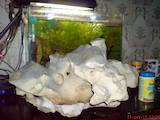 Рыбки, аквариумы Водные растения, цена 3 Грн., Фото