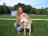 Собаки, щенки Сибирский хаски, цена 4200 Грн., Фото