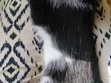 Кошки, котята Неизвестная порода, цена 5 Грн., Фото