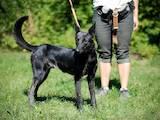 Собаки, щенята Безпорідна, ціна 10 Грн., Фото