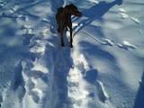 Собаки, щенки Немецкая гладкошерстная легавая, цена 1000 Грн., Фото