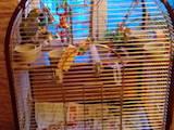 Папуги й птахи Папуги, ціна 26000 Грн., Фото