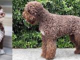 Собаки, щенки Разное, цена 26360 Грн., Фото