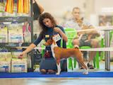 Собаки, щенки Басенджи, цена 10000 Грн., Фото